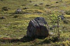 Um grupo de pedras que encontram-se na grama verde da mola em Murmansk em um dia claro, ensolarado Foto de Stock Royalty Free