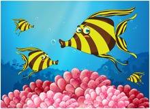 Um grupo de peixes listra-coloridos sob o mar Imagem de Stock
