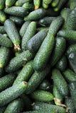 Um grupo de pepinos verdes Imagem de Stock Royalty Free