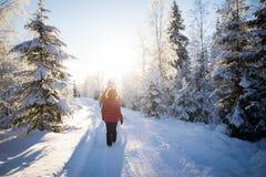 Um grupo de pessoas que anda na floresta do inverno imagens de stock royalty free