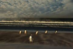 Um grupo de pinguins do gentoo em um Sandy Beach em um dia ventoso fotos de stock royalty free