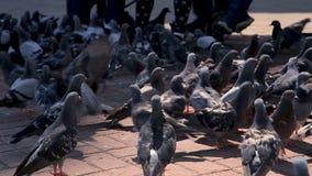 Um grupo de pombas da cidade filme