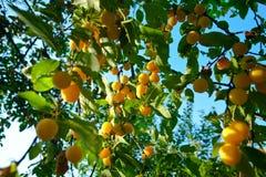 Um grupo de prumos amarelos Foto de Stock