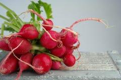 Um grupo de rabanetes vermelhos Fotografia de Stock