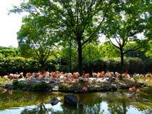 Um grupo de ruber do pterus de Phoenico no parque animal selvagem de Shanghai Fotos de Stock
