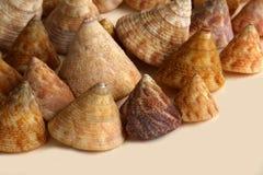Um grupo de shell superiores Imagem de Stock