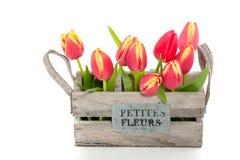 Um grupo de tulips vermelhos Foto de Stock