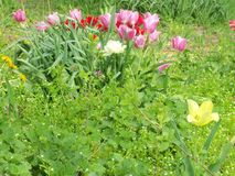 Um grupo de várias, flores coloridas imagem de stock