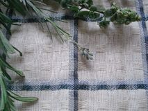 Um grupo de verdes frescos em uma toalha de cozinha Ramalhete de ervas picantes, composto dos alecrins, oréganos, alfazema Fotografia de Stock Royalty Free