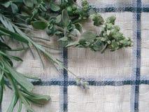 Um grupo de verdes frescos em uma toalha de cozinha Ramalhete de ervas picantes, composto dos alecrins, oréganos, alfazema Imagem de Stock Royalty Free