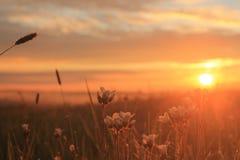 Um grupo do Wildflower no nascer do sol Imagem de Stock Royalty Free