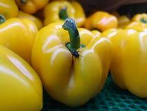 Um grupo perfeito de pimentas de sino amarelo, se weren o ` t para um visitante da mosca, que licença do ` t do wouldn fotografia de stock royalty free