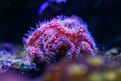 Um habitante maravilhoso da parte inferior de mar imagem de stock