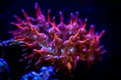 Um habitante maravilhoso da parte inferior de mar imagens de stock