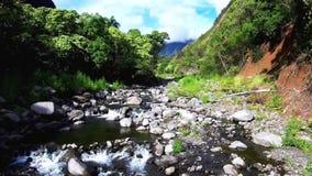 Um hawai de fluxo do rio video estoque