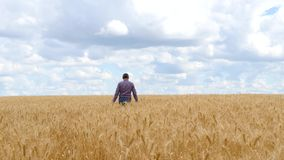 Um homem é um fazendeiro em um campo de trigo, examina as orelhas Paisagem rural bonita com nuvens Agricultura e video estoque