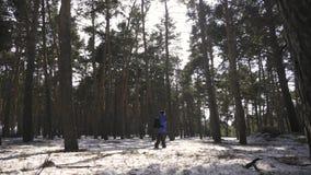 Um homem é um turista em uma floresta do pinho com uma trouxa Um viajante novo em uma caminhada no inverno Atividade do esporte d vídeos de arquivo