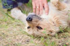 Um homem acaricia seu cão imagens de stock