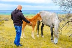 Um homem alimenta um cavalo novo com suas mãos no pasto imagem de stock