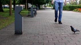 Um homem anda abaixo da rua e joga uma garrafa plástica pelo lixo vídeos de arquivo
