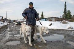 Um homem anda dois cães ao longo da estrada da mola fotografia de stock royalty free