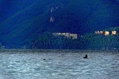 Um homem canoeing Fotografia de Stock