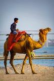 Um homem com cavaleiro de espera do camelo no ghaat do assi imagem de stock royalty free
