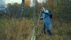 Um homem com uma trouxa em etapas de uma capa de chuva sobre uma árvore caída na floresta vídeos de arquivo