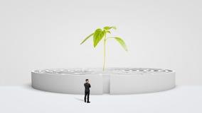 Um homem de negócios que está na frente de um labirinto redondo branco com uma planta verde nova que cresce de seu centro fotografia de stock royalty free