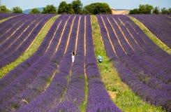 Um homem e uma mulher isolados em um levender colocam em Valensole, Provence, França imagens de stock royalty free