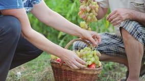 Um homem e umas uvas e uns vegetais maduros recolhidos uma mulher em seu jardim, avaliam a qualidade de cada grão da uva, e vídeos de arquivo