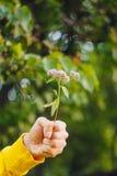 Um homem está mantendo uma flor contra o fundo borrado das árvores e da grama bokeh, close-up, piquenique, verão fotografia de stock