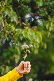 Um homem está mantendo uma flor contra o fundo borrado das árvores e da grama bokeh, close-up, piquenique, verão imagens de stock