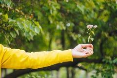 Um homem está mantendo uma flor contra o fundo borrado das árvores e da grama bokeh, close-up, piquenique, verão imagens de stock royalty free