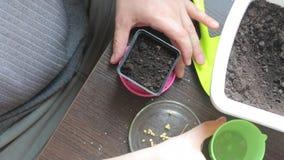 Um homem está plantando sementes em um potenciômetro Águas as sementes plantadas com água de um copo Vista de acima filme