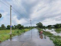Um homem está travando peixes na estrada inundada em Tailândia fotografia de stock royalty free