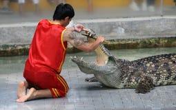 Um homem executa sua mostra do crocodilo Fotos de Stock Royalty Free