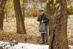 Um homem idoso alimenta patos na costa de uma lagoa na queda Rússia, Ramenskoye, em outubro de 2017 Fotografia de Stock