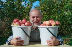 Um homem idoso no jardim com as cubetas das maçãs Imagem de Stock