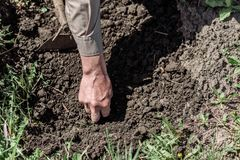 Um homem idoso que planta sementes no jardim Foto de Stock