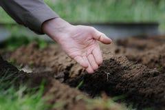 Um homem idoso que planta sementes no jardim Fotografia de Stock