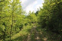 Um homem na natureza e no espaço verdes infinitos bonitos Imagens de Stock Royalty Free