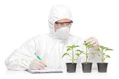 Um homem no uniforme que examina uma planta da pimenta Imagem de Stock Royalty Free