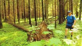 Um homem nos óculos de sol com uma trouxa dá uma volta através da floresta ao lado de uma árvore caída video estoque