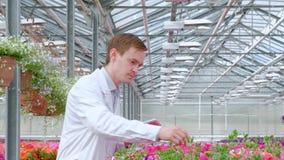 Um homem novo em um revestimento branco, em um biólogo do cientista ou no agrônomo examina e analisa as flores e as plantas verde filme