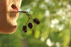 Um homem novo realiza em sua boca um galho de uma planta com os cones no por do sol no fundo das hortali?as brilhantes fotografia de stock