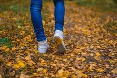 Um homem para de andar O ` s da amiga do ` s da menina Meninas quentes na natureza no parque entre as folhas do amarelo outono Fotografia de Stock