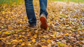 Um homem para de andar O ` s da amiga do ` s da menina Meninas quentes na natureza no parque entre as folhas do amarelo outono Foto de Stock Royalty Free