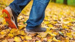 Um homem para de andar O ` s da amiga do ` s da menina Meninas quentes na natureza no parque entre as folhas do amarelo outono Fotos de Stock