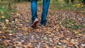 Um homem para de andar O ` s da amiga do ` s da menina Meninas quentes na natureza no parque entre as folhas do amarelo outono Fotos de Stock Royalty Free